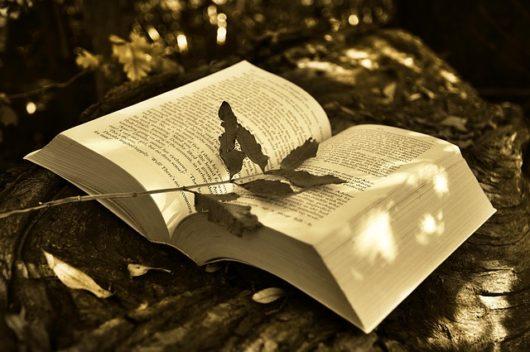 book-530x352