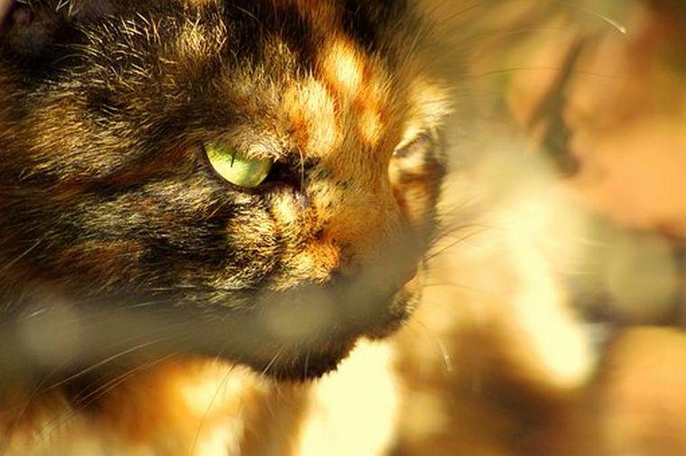 cat-2413169__340